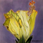 Hibiscus 16 x 16 in. Available mounted, unmounted, or pillow top, use contact form for pricing.